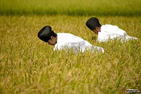 日本人とお米